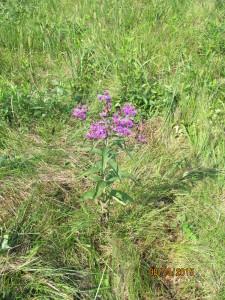 Weeds_Wild_flowers_Bx