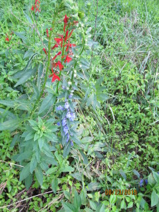 Weeds_Wild_flowers_Ex