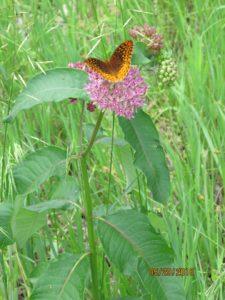 butterfly_food_1