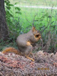 squirrel_B