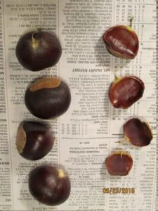 chestnuts_5