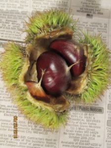 chestnuts_8